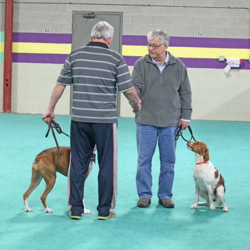 Cgc Dog Training Classes