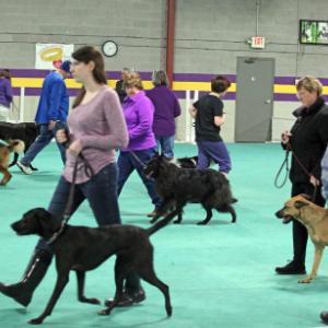 Car Dun Al Dog Training Club